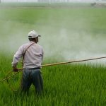 Are Pesticides Bad for Your Garden?