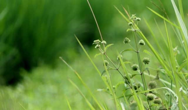 grass How to Prevent Weeds from Taking Over Your Lawn