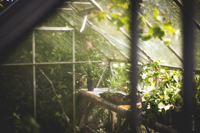 What you need to know when gardening in a Greenhouse