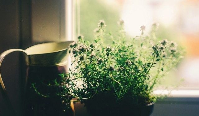 how to grow and water a house plant