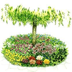 Garden, Easy-Care Shade Plan