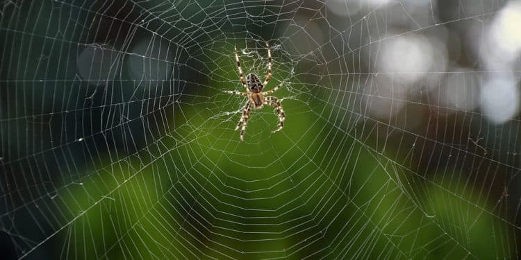 How to Get Rid of Garden Spiders