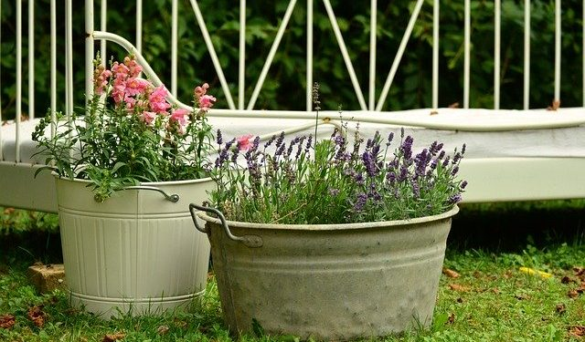 What To Know When Selecting A Plant Container