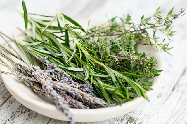 growing thyme in your garden