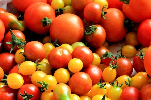how to grow good tomatoes in the garden and greenhouse
