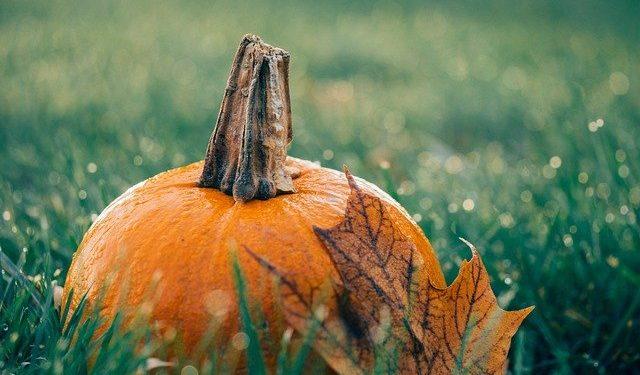 Gardening in October, what to do in the garden