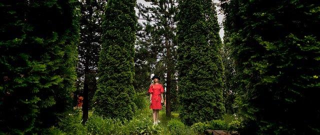 how ot use thuja in you garden
