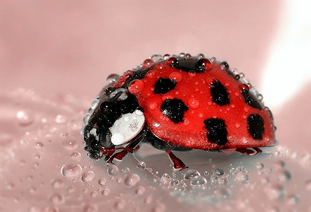 Six Beneficial Garden Insects