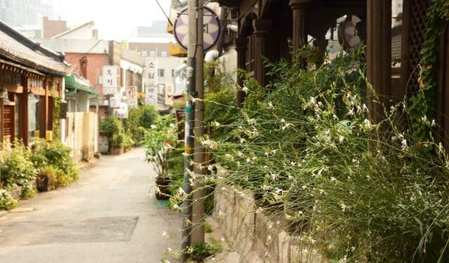 city gardening with plants and vegetables