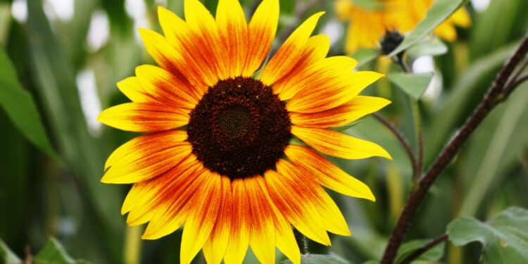 How to Successfully Cultivate Your Garden for Flower Seeds