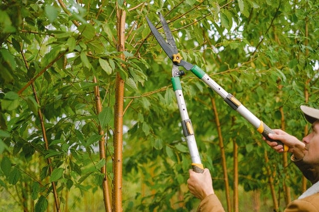 The Top Four Reasons Why Tree Trimming Is Important