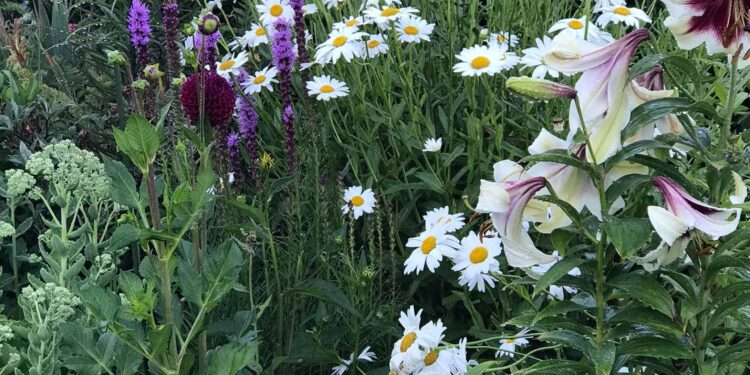 perennial plants blooming in july