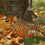 landscape fall cleanup